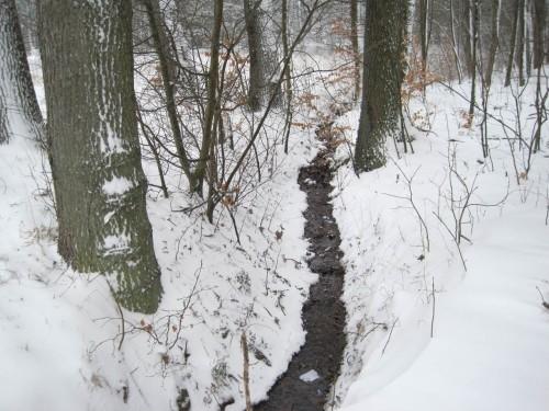 Der Quellbach im Wald - winterwarm.
