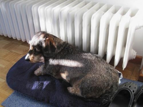Da freut sich Sonnenhund Socke und profitiert von zweifacher Wärmestrahlung.
