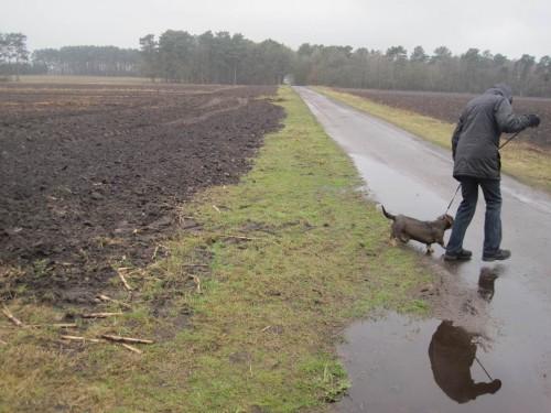 Landgewinnung auch an der anderen Feldseite - Wegerandstreifen geniessen in der Realität dasselbe Schicksal wie Gewässerrandstreifen.