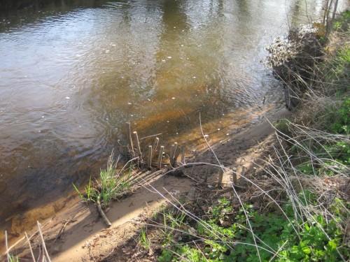Vor einem noch verbliebenen Großbaum sollte zu seiner Unterstützung Ufer aufgebaut werden. Das hat der Treibselsammler hervorragend getan.