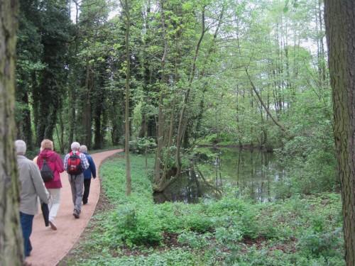 Trotz des - sicher berechtigten - Vorwurfs, in Wilhelmsburg seien allzu viele Bäume gesägt worden hier der Beweis: es sind auch welche stehen geblieben, idyllisches, altarmähnliches Stillgewässer.
