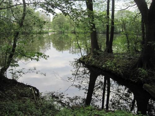 Und noch ein Stillgewässer - wie ein verwunschener Waldteich.