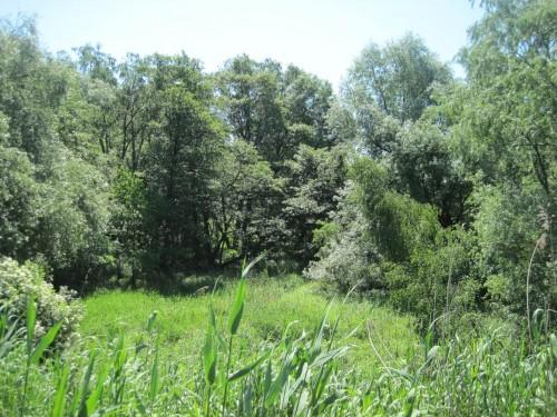 Ich gönne mir eine Natur-Tour entlang dem NSG Rhee, einem abgedeichten Auwaldrest, der früher ein Tideauenwald war.