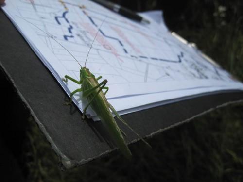 Wir haben Besuch. Der große, grüne Springer studiert den Plan.
