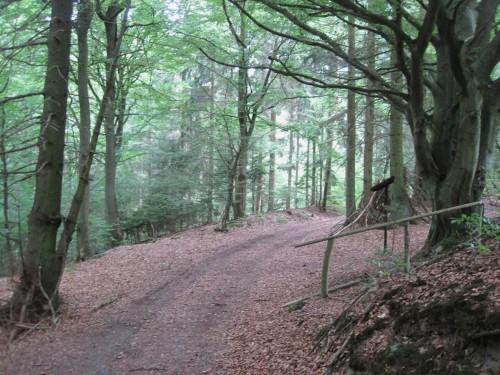 Auf gut begehbarem Waldweg startet die Tour.