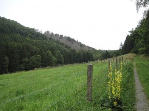 Der Aufstieg verläuft neben dem V-förmigen Tal entlang Wiesen und vielfältigem Wald. Hinten links ist eine Borkenkäfer-Aktionsfläche zu erkennen.