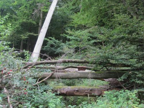 Wald darf im Nationalpark werden und vergehen - und wieder werden ...