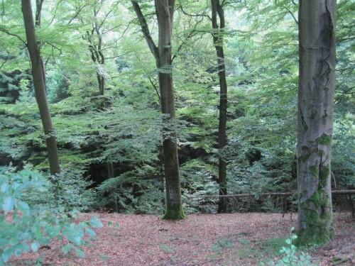 Blick nach links, den Hang runter - Buchenwald geht steil in feuchten Bachauwald über.