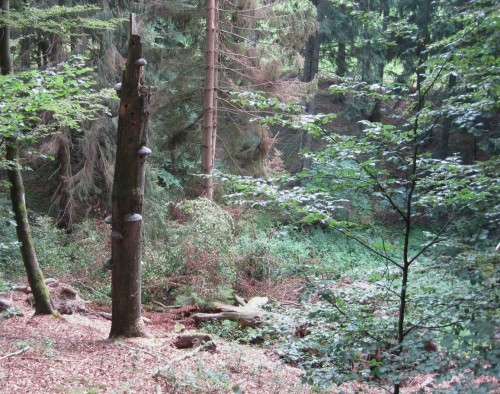 Und immer wieder Werden und Vergehen im vielfältig sich entwickelnden Wald.