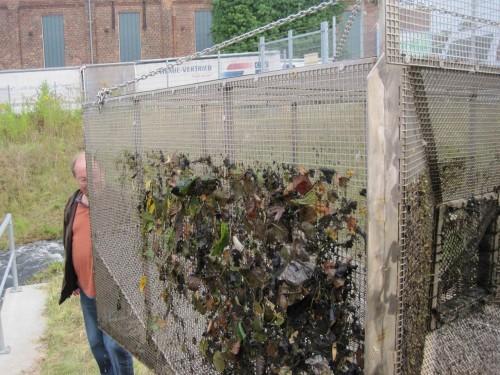 Was wird uns der Fang in der Fischpass-Reuse heute sagen? Auf jeden Fall wirkt sie als Treibselsammler und zeigt die Futtergrundlage der Bachorganismen: (Erlen)Blätter.