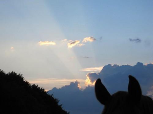 Sonnenuntergang mit Pferd.