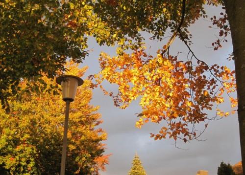 Buchenweg-Buchen im Abendlicht. Was regen sich einige Nachbarn wieder über das Laub auf - als sei dies der erste Herbst, den sie erleben oder als atmeten sie keinen Sauerstoff (?).