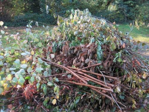 Neues Rohmaterial - da sind noch mehr Büsche im Garten ...   :-)