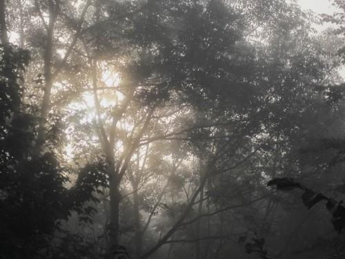 Sonnenblick mit Bäumen.