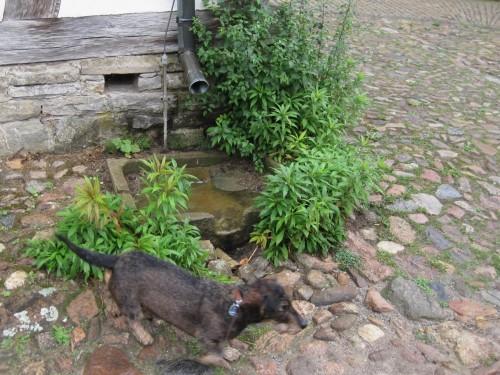 Gute Lösung fürs Regenwasser - oberflächig ableiten. Tiere finden eine Tränke, Vögel baden hier auch gern.