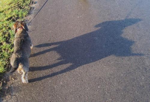 Noch sieht der morgendliche Hund(eschatten) eher kastenförmig aus.