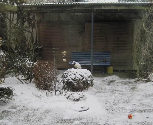 Der Rabe im Schnee. Kaum kann man das Bisschen Weiss Schnee nennen - immer noch kalt-trocken und pulverig.