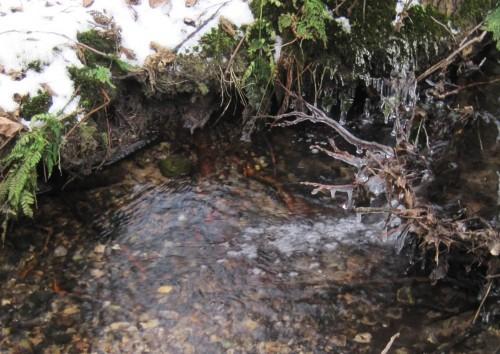 Und so, zum Beispiel, sieht der oberste Teil eines naturnahen, winterwarmen Bachs aus - Eis in der Luft, lebendiges Fliessen über Kiesgrund.