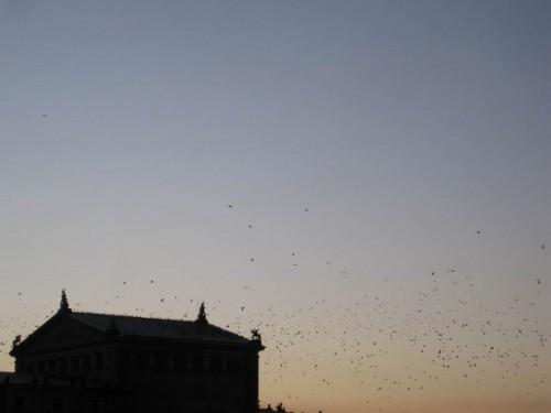 Da sind aber auch Vögel ...
