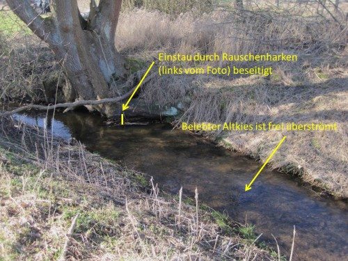 Schnell die Kontrolle bachaufwärts: Ja, der Einstau ist weg, der mit Organismen besiedelte Altkies wird frei überströmt. So soll es sein.
