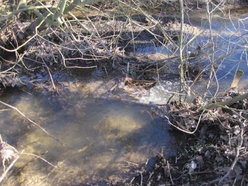 Ich gehe die Strecke noch einmal ab. An zwei Stellen tolerieren die Grundeigentümer in den Bach gefallene Grauweiden. Mal sehen, wie lange das gut geht. Tiefen- und Strömungsvielfalt jedenfalls ist hier vorhanden - aber auch heftiger Einstau bei Hochwasser.