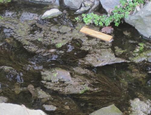 Dem prallen Sonnenlicht ausgesetzt - der standorttypische Gehölzsaum fehlt (noch) - wird hier gewässerschädlich Biomasse überproduziert.
