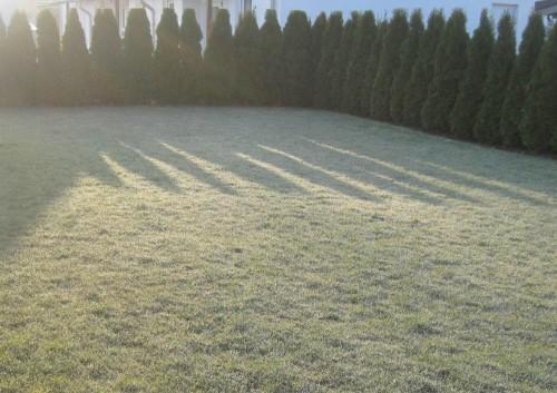Nach Sonnenaufgang - kalt in Korbach auf der Höhe. Raureif taut zu kleinen Wassertropfen.