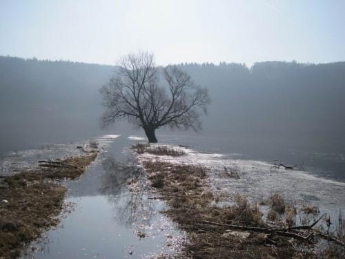 Die alte Weide im Einstau auf dem Flügeldamm. Bald werden ihre Wasserwurzeln wieder trocken fallen. - Ich kehre um.