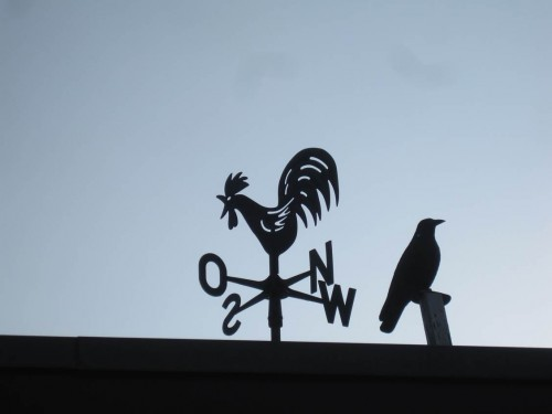 Mal sehen, wohin oder woher der Wind weht, welche Geschichte die Zukunft bringt. Hahn und Krähe gucken in verschiedene Richtungen.