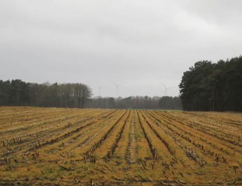 Ein wenig Agro-Gelb-Ästhetik zum Schluss.