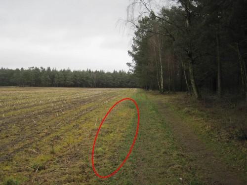 Der Waldweg ist gleich mitbehandelt - macht ja nix (?).