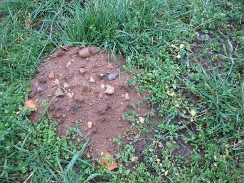 Eindeutige Zeichen im Umfeld, hier ein Maulwurfshaufen: steinig-lehmige Moräne - hier fliessen von Natur aus Stein-/Kiesbäche.