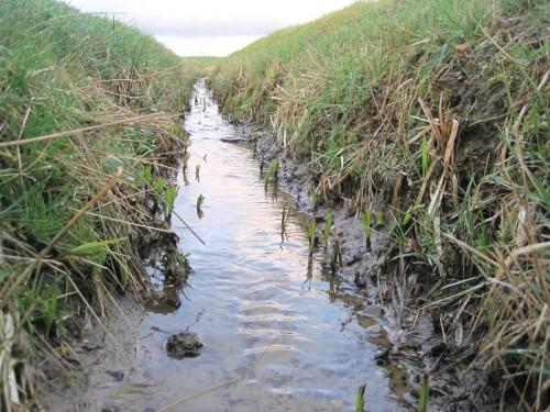 Tief ausgehoben, maschinenunterhalten und völlig unbeschattet liegt dieser Quellbach im Gelände. Sumpfpflanzen werden sein Profil angesichts des Lichtüberschusses demnächst zuwachsen.