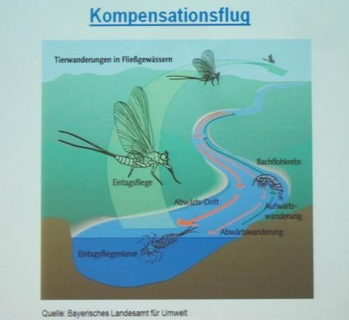 Unterschiedliche Wirbellose haben unterschiedliche Wanderstrategien.