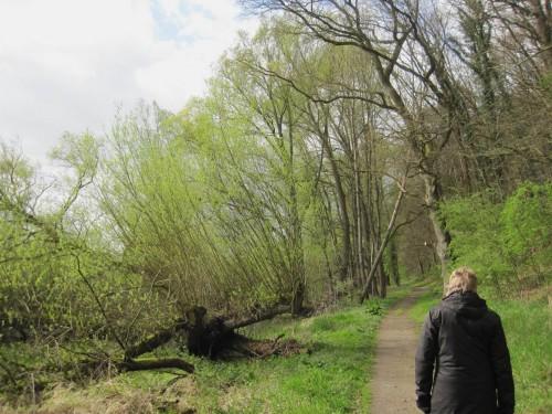 Der Wander- und Radweg liegt genau zwischen Auwald und Hangwald. Wer standortabhängige Besiedlung mit Bäumen und mehr bestaunen möchte, geht hier richtig.