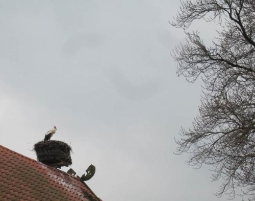 Auf der Rückfahrt sehen wir noch einen Weissstorch auf dem Nest - wenn das kein Glück bringt ...