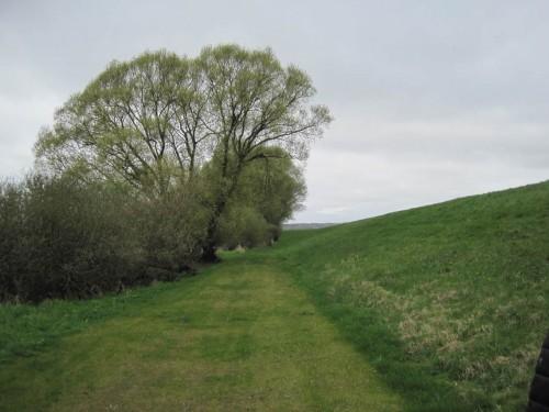 Alte Weide und Weidengebüsch direkt am Deich - nicht überall herrscht die Kettensäge wie in Niedersachsen.
