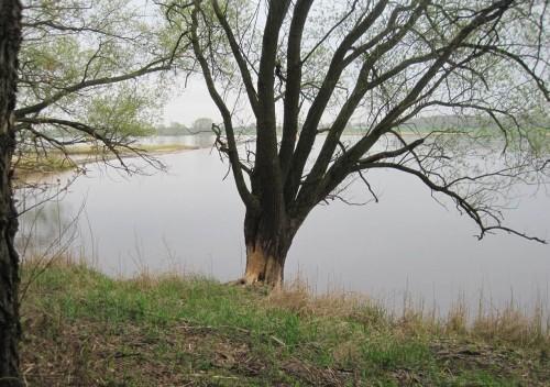 Wo ein Baum so intensiv neu bearbeitet ist ...