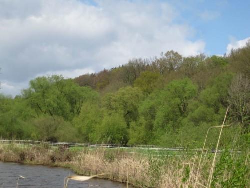 Eine Vielfalt von Frühlingsgrün zwischen Elbe und Elbhang - es soll Besucher geben, die allein dieser vielen Grüntöne wegen nach Deutschland reisen.