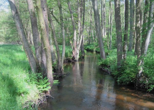 """Wichtige Erkenntnis der Exkursion: Bäume, hier meist Erlen, garantieren Erosionsschutz und bieten eine Vielzahl von Lebensräumen. So sieht einschliesslich seines lichten Schattens ein naturnahes Fliessgewässer aus - """"Keeping Rivers Cool"""", wie english-sprachige Raum in Zeiten des Klimawandels zunehmend propagiert."""