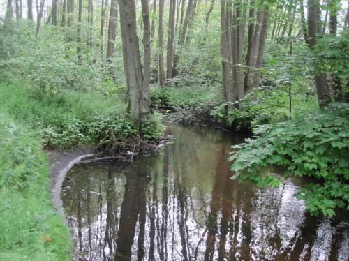 Wo der Baumschutz verloren ist, gingen Hunderte m³ Boden zu Tal und mussten anderswo teuer gebaggert werden. Die alte Erle ist Zeugin der Vergangenheit - SO schmal wäre der lebendige Bach hier.