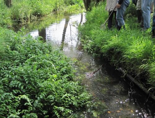 Wasserbaumeister Pflanze zum Dritten - Für Hochwasserbesorgte sei ergänzt: Diese Pflanzen haben einen flexiblen Körper, legen sich bei höheren Wasserständen ohne Widerstand flach ins Geschehen.
