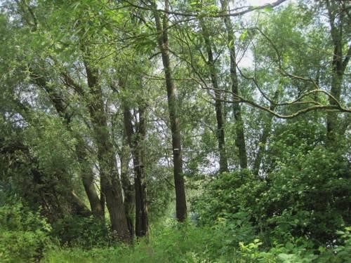 Nicht zuletzt der wassergebundene Auwald mit seiner Entwicklung in die 3. Dimension beeindruckt - schon allein und nicht zuletzt mit seinen vielen zwitschernden Bewohnern.