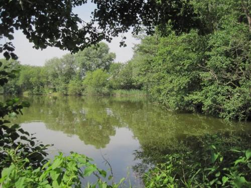 Idyllische Buchten gibt es am Baggersee Neuland.