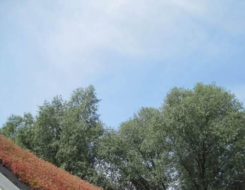 Das U im WUZ steht für Umwelt, hier ein luftiger Eindruck in rot, grün, blau.