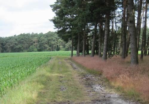 Schwarz rot grün - keine Blüten in der Industrie-Agrarlandschaft. Wegränder beseitigt bis in den öffentlichen Raum - und für sowas bezahlen wir Steuerzahler Subventionen?