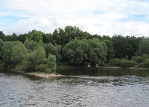 Zwei Gänse fliegen vorbei, ein versteckter Reiher wartet am Buhnenkopf auf Fisch.