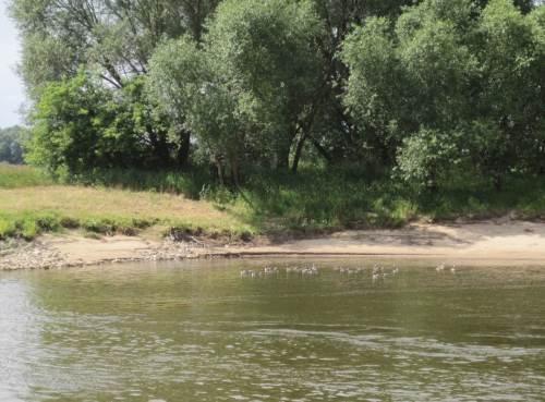 Für diese Gänse fahren wir wohl zu dicht am Ufer. Sie verlassen ihren Ruheplatz an Land und schwimmen aufs Wasser.