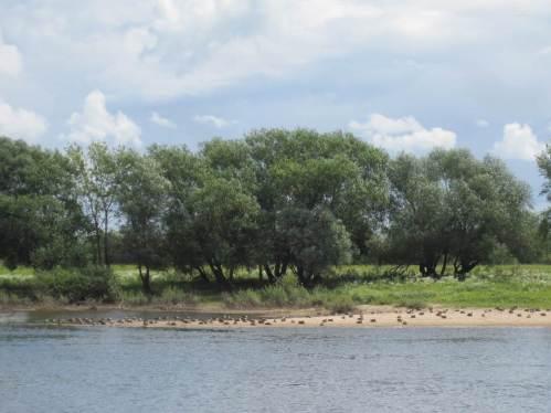Von diesen Gänsen - am anderen Ufer - sind wir so weit weg, dass sie keinerlei Notiz von uns nehmen.