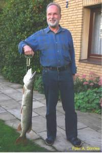 Bei 97 cm Länge bringt der Fisch 12 Pfund auf die Waage.
